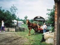 Paardentoerisme-2HRS